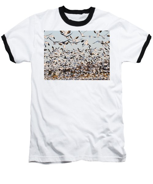Snow Geese Takeoff From Farmers Corn Field. Baseball T-Shirt