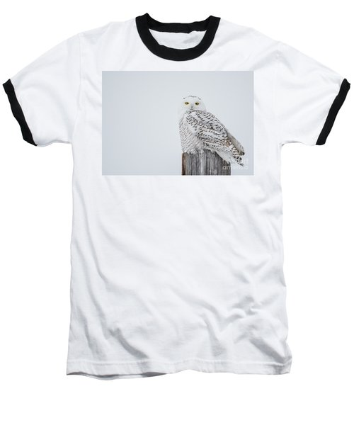Snowy Owl Perfection Baseball T-Shirt
