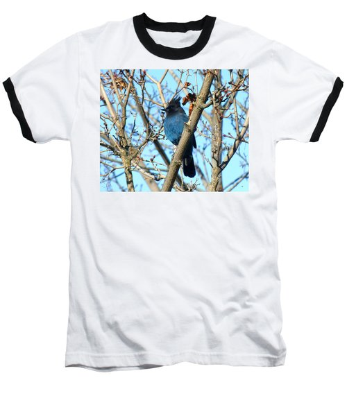 Steller's Jay In Winter Baseball T-Shirt