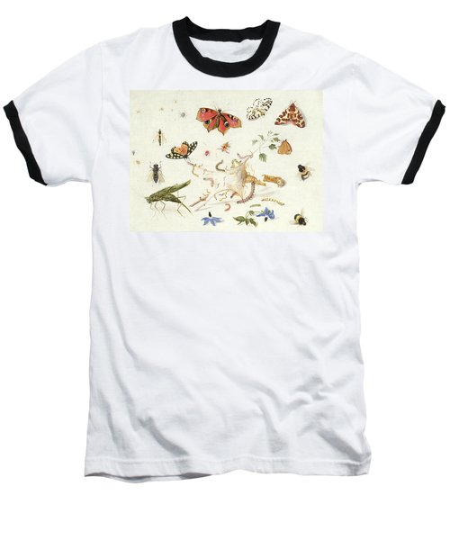 Study Of Insects And Flowers Baseball T-Shirt by Ferdinand van Kessel