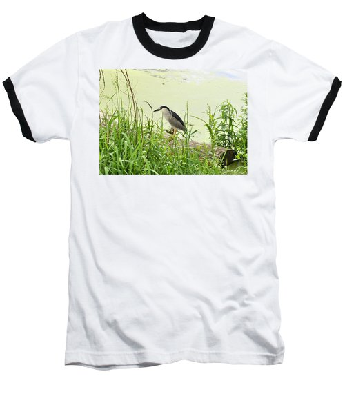 The Black-crowned Night Heron Baseball T-Shirt