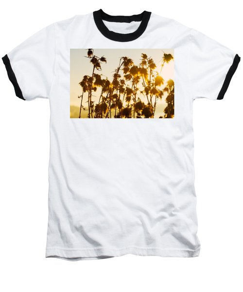Thistles In The Sunset Baseball T-Shirt by Chevy Fleet