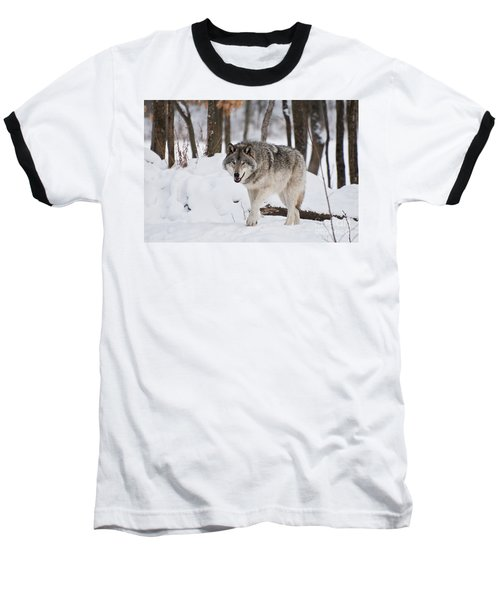 Baseball T-Shirt featuring the photograph Timber Wolf In Winter Forest by Wolves Only