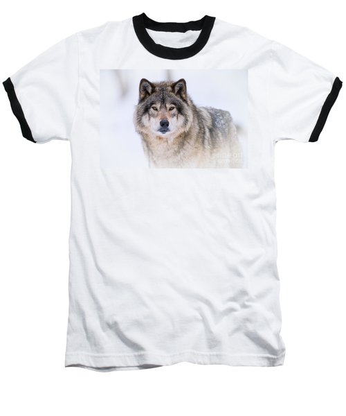 Timber Wolf Pictures 256 Baseball T-Shirt