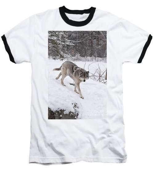 Baseball T-Shirt featuring the photograph Timber Wolf  by Wolves Only