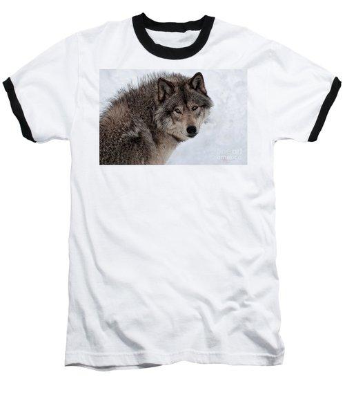 Baseball T-Shirt featuring the photograph Timberwolf At Rest by Bianca Nadeau