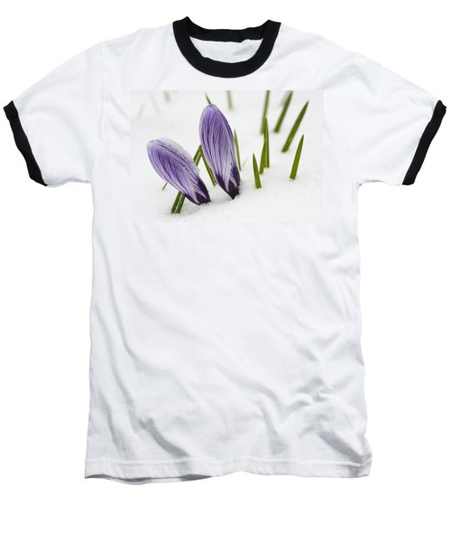 Two Purple Crocuses In Spring With Snow Baseball T-Shirt