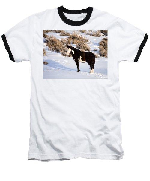 Wild Horse Stallion Baseball T-Shirt by Nadja Rider