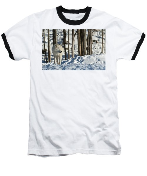 Baseball T-Shirt featuring the photograph Winter Arctic Wolf by Wolves Only