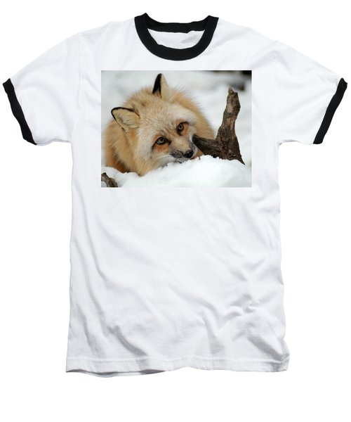 Winter Fox 2 Baseball T-Shirt by Richard Bryce and Family