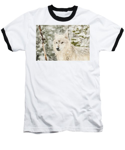 Wolf In Snow Baseball T-Shirt