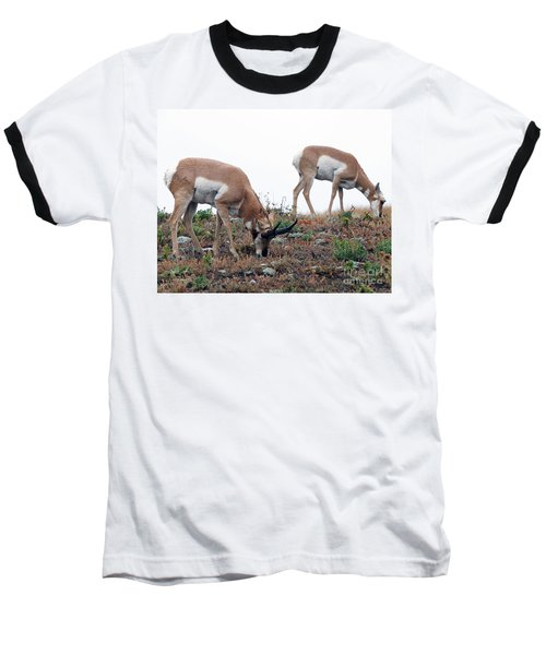 Baseball T-Shirt featuring the photograph Antelopes Grazing by Art Whitton