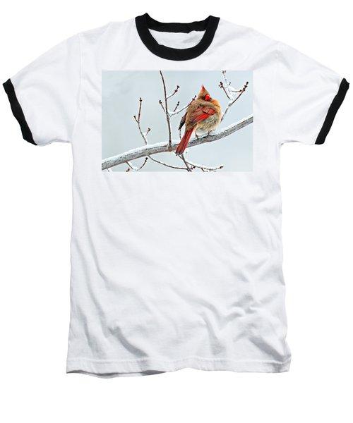 Cardinal I The Snow  Baseball T-Shirt