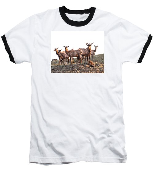 Early Morning Herd Baseball T-Shirt by CR  Courson
