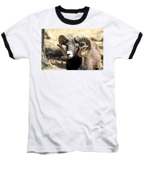 European Big Horn - Mouflon Ram Baseball T-Shirt