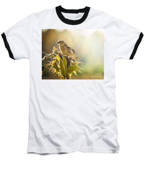 Finch Aglow Baseball T-Shirt by Cheryl Baxter