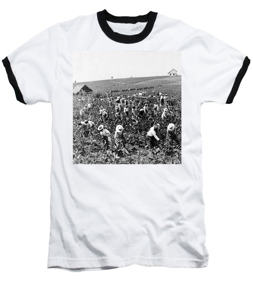 Tobacco Field In Montpelier - Jamaica - C 1900 Baseball T-Shirt