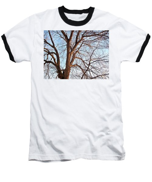 Baseball T-Shirt featuring the photograph Winter Sunlight On Tree  by Chalet Roome-Rigdon