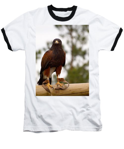 Harris's Hawk Baseball T-Shirt