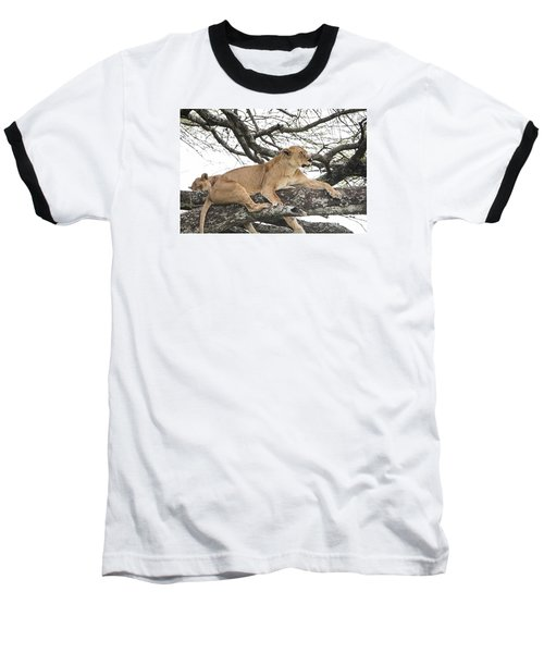 Lions In A Tree Baseball T-Shirt by Pravine Chester
