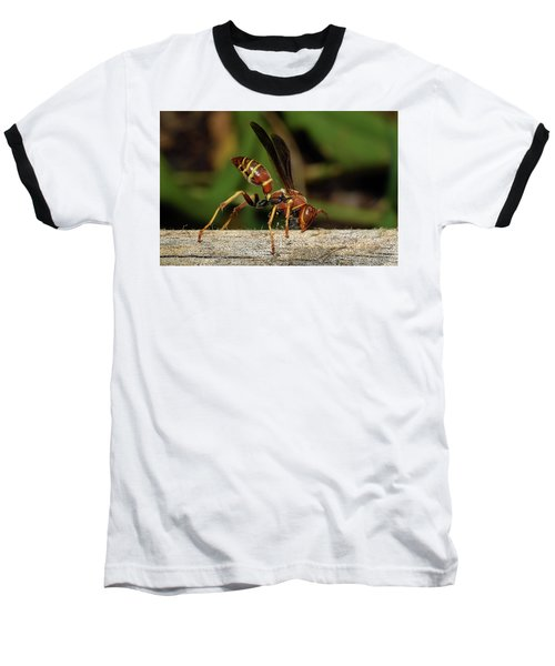 Paper Wasp Baseball T-Shirt