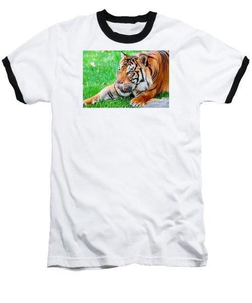 Pre-pounce Tiger Baseball T-Shirt