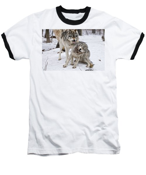 Baseball T-Shirt featuring the photograph Timber Wolves In Winter by Michael Cummings