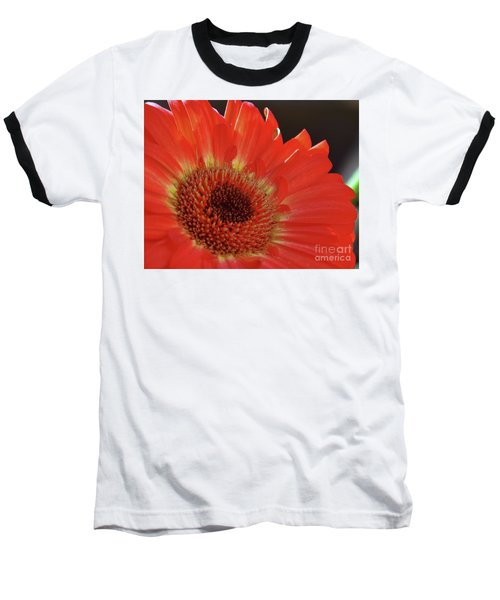 Baseball T-Shirt featuring the photograph Red Gerber by Elvira Ladocki
