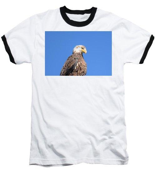 Bald Eagle Juvenile Perched Baseball T-Shirt