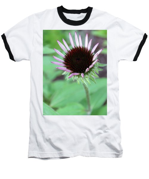 Emerging Coneflower Baseball T-Shirt by Rebecca Overton