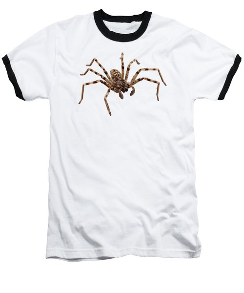 Wolf Spider Lycosa Sp Baseball T-Shirt
