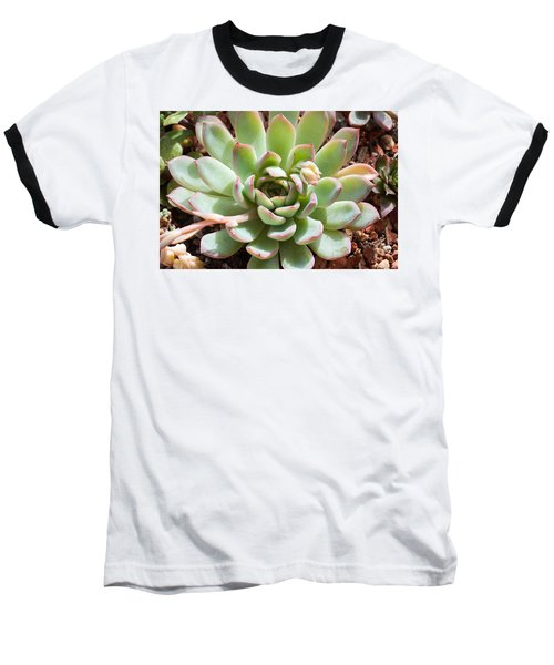 Baseball T-Shirt featuring the photograph A Young Succulent Plant by Catherine Lau