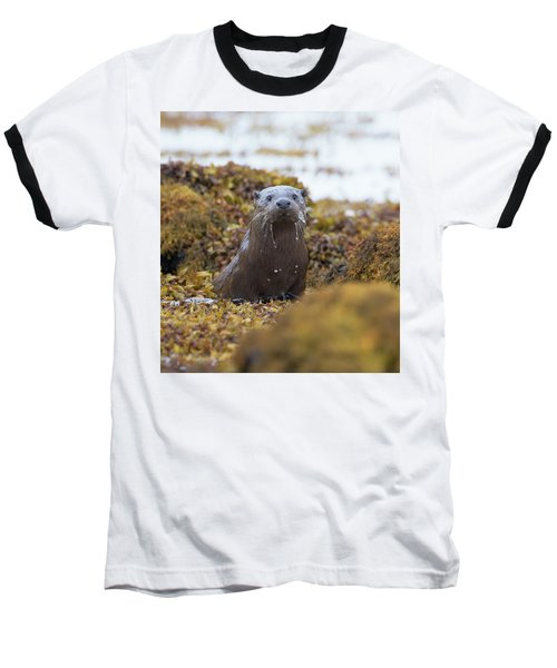Alert Female Otter Baseball T-Shirt