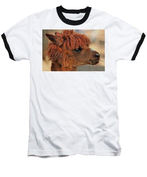 Alpaca Portrait Baseball T-Shirt by Sheila Brown