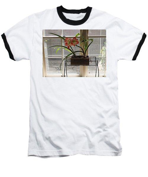 Baseball T-Shirt featuring the photograph Amaryllis And Window by Nancy Kane Chapman