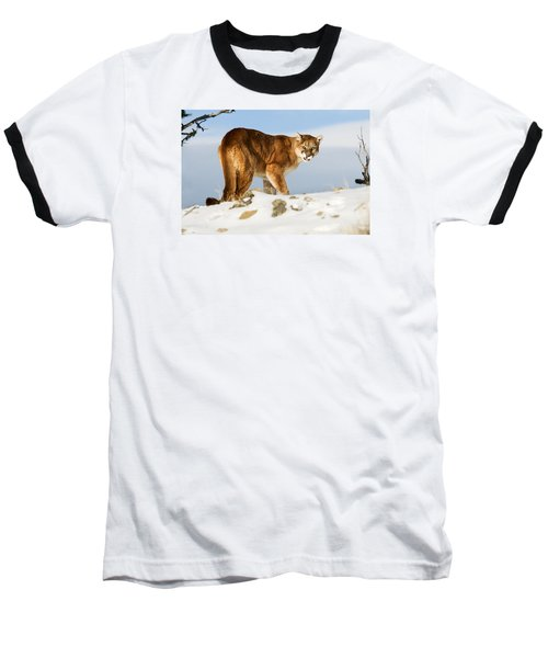Angry Mountain Lion Baseball T-Shirt