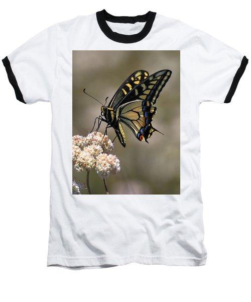 Anise Swallowtail Baseball T-Shirt