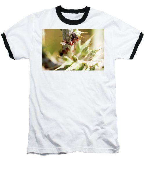 Ant Farming Baseball T-Shirt
