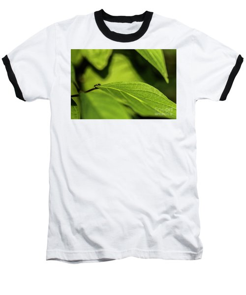 Baseball T-Shirt featuring the photograph Ant Life by JT Lewis