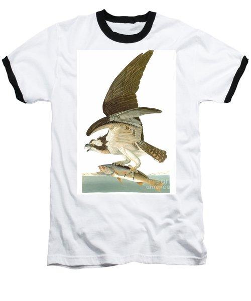 Audubon: Osprey Baseball T-Shirt