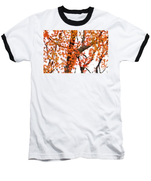 Autumn Red Leaves On A Tree   Baseball T-Shirt