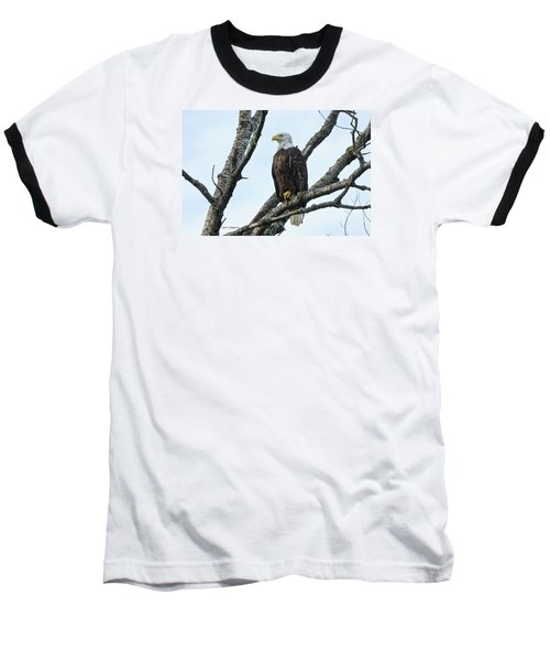 Baseball T-Shirt featuring the photograph Bald Eagle 5 by Steven Clipperton