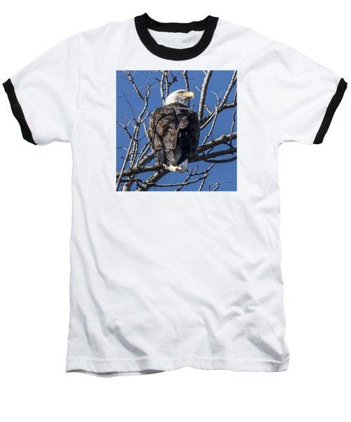 Bald Eagle Perched Baseball T-Shirt