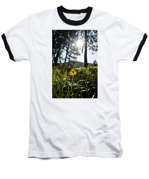 Balsamroot Baseball T-Shirt