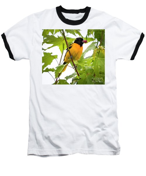 Baseball T-Shirt featuring the photograph Baltimore Oriole With Raspberry  by Ricky L Jones