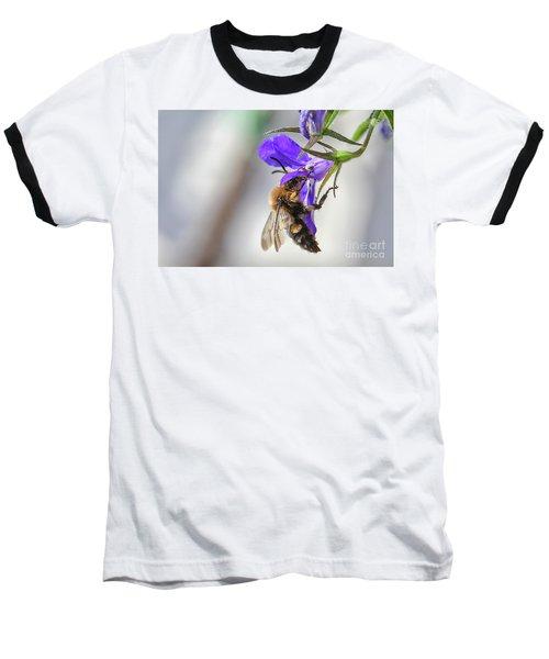 Bee On Purple Flower Baseball T-Shirt