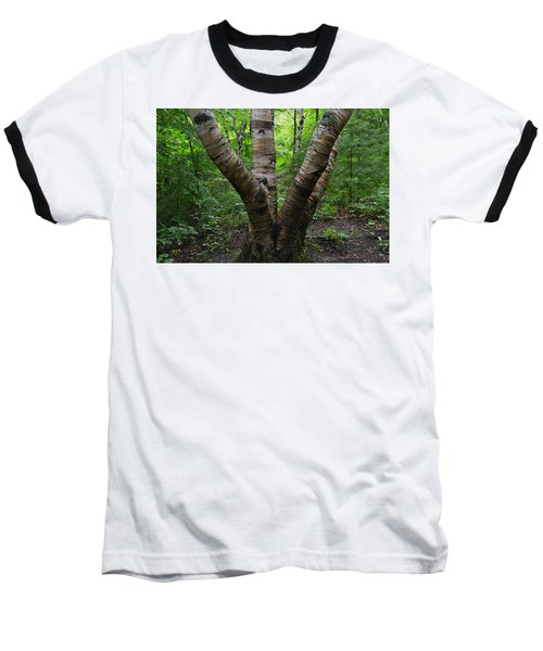 Birch Bark Tree Trunks Baseball T-Shirt