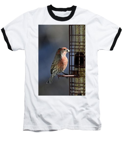 Bird Feeding In The Afternoon Sun Baseball T-Shirt