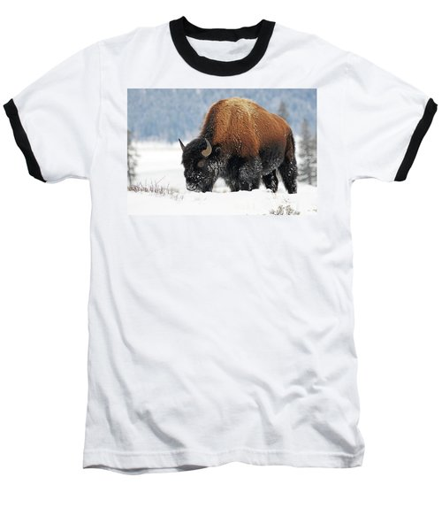 Bison Roaming In The Lamar Valley Baseball T-Shirt