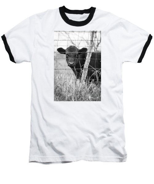 Black Angus Calf Baseball T-Shirt